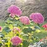 Namestitev profesionalnega sistema za zalivanje travnika ali vrta